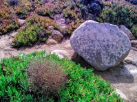 Seen at Cabo da Roca
