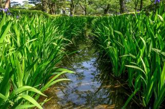 Kerokue, Kanazawa, Japan
