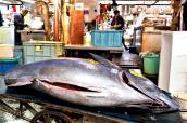 jma_fish_market_tokyo_008