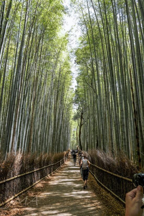 JMA_Arashiyama_Japan_02