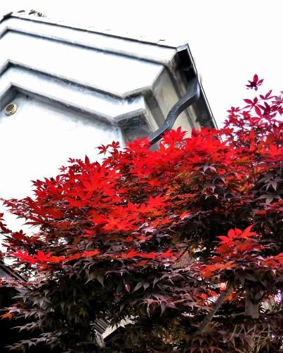 JMA_Japan_213