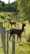 JMA_New_Zealand_015