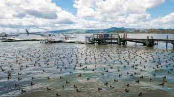JMA_New_Zealand_018_Rotorua_lake