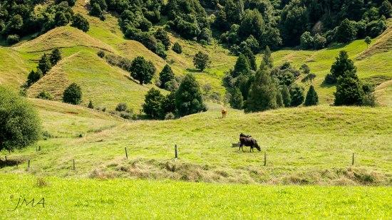 JMA_New_Zealand_039_Northern_Island
