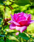 JMA_Poland_Warsaw_botanical_garden