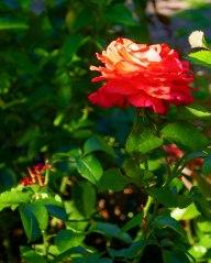 JMA_Poland_Warsaw_botanical_garden_2