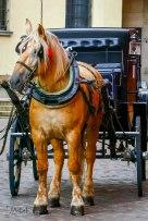 JMA_Poland_Warsaw_historical_old_town_12