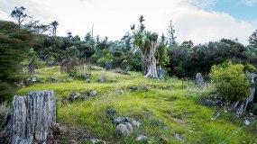 JMA_New_Zealand_143
